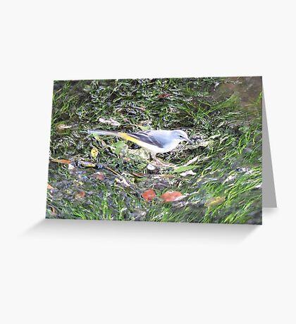 Grey Wagtail Greeting Card