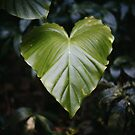green heart by Sue Hammond