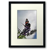 Vanessa - The High Admiral Framed Print
