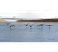 Canadian Geese Takeoff Photographic Print