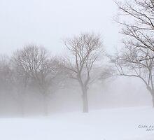 Foggy Trees by Gilda Axelrod