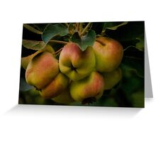 Organic lady apples Greeting Card