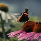 Red Admiral by KatMagic Photography