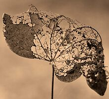 Redbud Lace by Otto Danby II