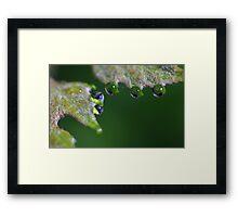 Water Droplet III Framed Print