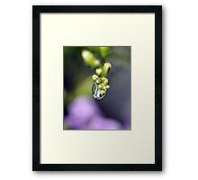 Water Droplet IV Framed Print