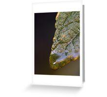 Water Droplet V Greeting Card