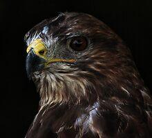 Portrait of a Buzzard by Brian Avery