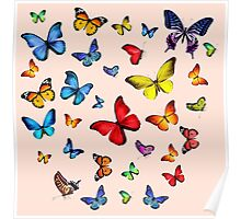 Beauty butterfly Poster