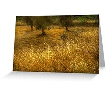Golden corn in the olive grove Greeting Card