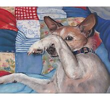 Dog in a Quilt Photographic Print