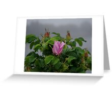 Rose at Dawn Greeting Card