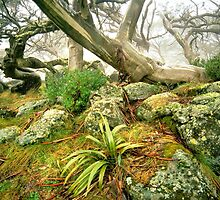 The Cobbler Plateau, Victoria by Kevin McGennan