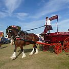 Horse and Cart by Vicki Spindler (VHS Photography)