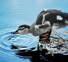 """""""Quenching my thirst..."""" by Laurie Minor"""