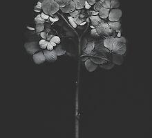 Dark Hydrangea by Bethany Helzer
