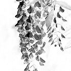 A Wisp of Wisteria - Black and White by MotherNature2