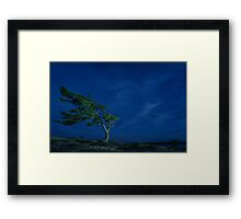 Windswept Canadian Pine at Twilight Framed Print