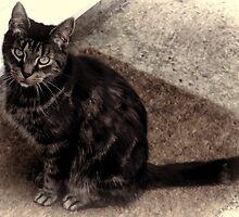 The Cat Sat On The Mat..................... by lynn carter