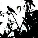 Early Bird by Barnbk02