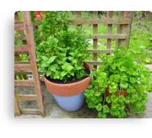 Parsley And Mint Canvas Print