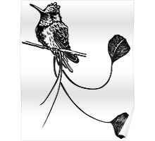 black and white paint draw eagle hummingbird  Poster