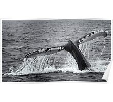 Humback Whale Tail Poster
