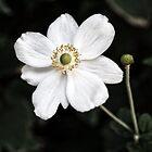 Fleur Blanche by Karen E Camilleri