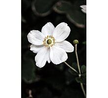 Fleur Blanche Photographic Print