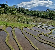 Rice Terraces by Brendan Buckley