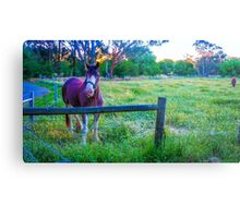 Clydesdales at Sunset in Strathfieldsaye, Victoria Metal Print