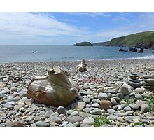 Driftwood and pebbles at Porth Ysgo Photographic Print