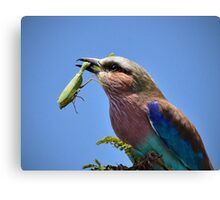 Caught!! Canvas Print