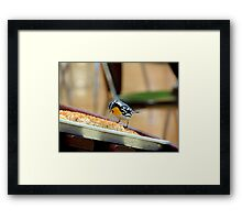 The Pastry Thief Framed Print