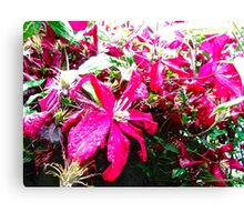 Pink Flowers in the rain Canvas Print