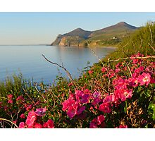 Rambling roses and Yr Eifl ( The Rivals) from Nefyn  Photographic Print