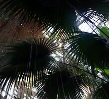 Palm Fronds with Cissus Roots by Betty Mackey