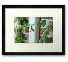 BAMF Spider Framed Print