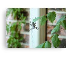 BAMF Spider Canvas Print