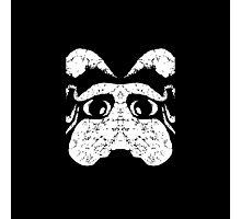 Ancient Dog Photographic Print