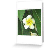 Plumeria Extreme Greeting Card
