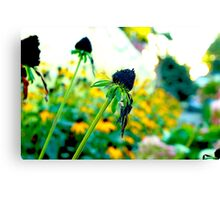 Sunflower Photography Canvas Print