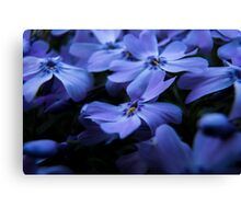 Creeping Phlox Canvas Print