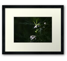 two patches of sunlight in granny's garden Framed Print