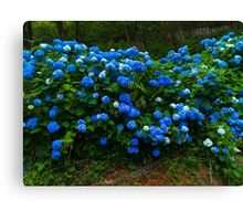 The blue flowers Canvas Print