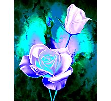 Rose Buds Photographic Print