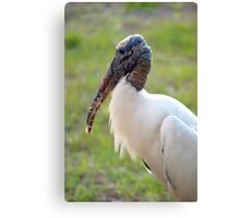 Just a nibble Canvas Print