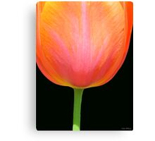 Big Orange Tulip Canvas Print