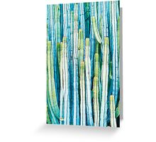 Cactus Rich Colors Greeting Card