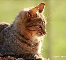 SUNRISE PROFILE CAPTURE - The African Wild Cat - Felis silvestris lybica by Magriet Meintjes